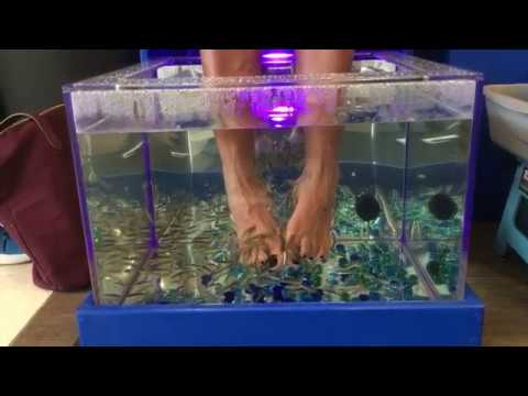 'Fish Spa' Experience Comes To Augusta
