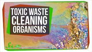 7 Organisms That Can Clean Toxic Waste