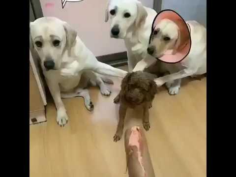 Кто съел колбасу собаки? ПОДПИСЫВАЙТЕСЬ НА КАНАЛ