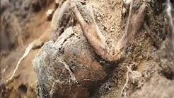 Richtstättenarchäologie – kurze Dokumentation aller bisherigen Grabungen im Land Brandenburg