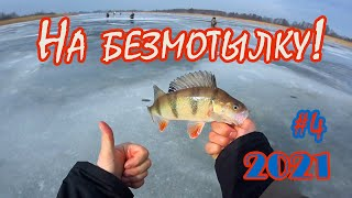 Раздача окуня на безмотылку Зимняя рыбалка 2021 Река Вента Последний лед