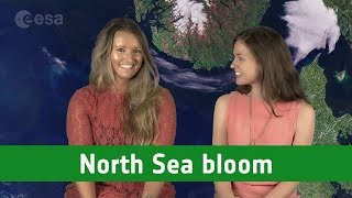 Earth from Space: North Sea bloom