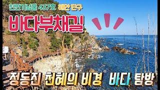 정동진 바다부채길 여행 안내서-최고의 힐링여행지 정동 …