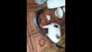 кот не может съесть щуку кот и щука после рыбалки рыбалка