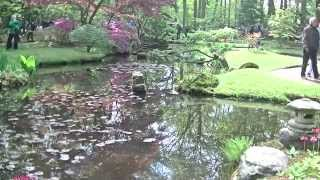 Japanese Garden The Hague (Japanse Tuin Den Haag) May 14, 2015