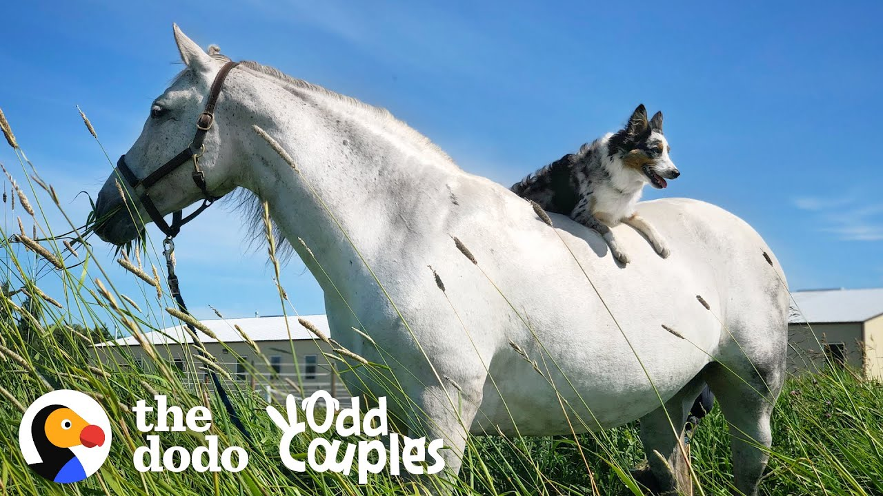 Dog Can't Stop Smiling When He's Riding His Favorite Horse | The Dodo Odd Couples