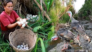 survival in the rainforest-woman found turkey egg for cook -Eating delicious HD