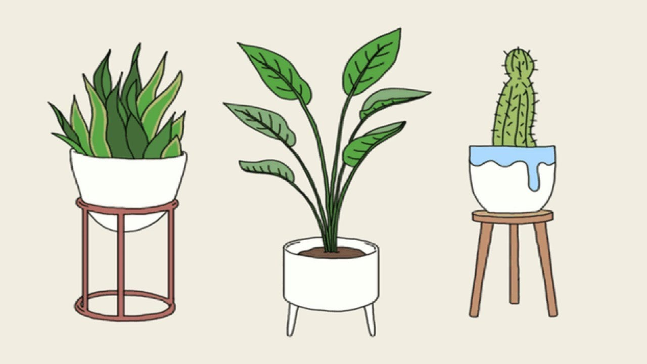Put These Plants In Your House And You'll Be Amazed With What Happens Next