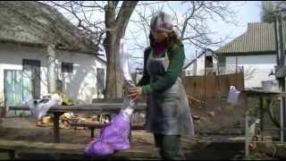 видео саженцы в Украине