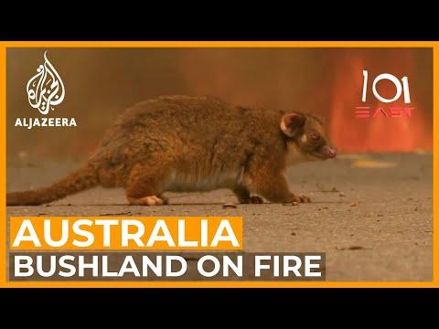 Australia's Wildlife Emergency | 101 East