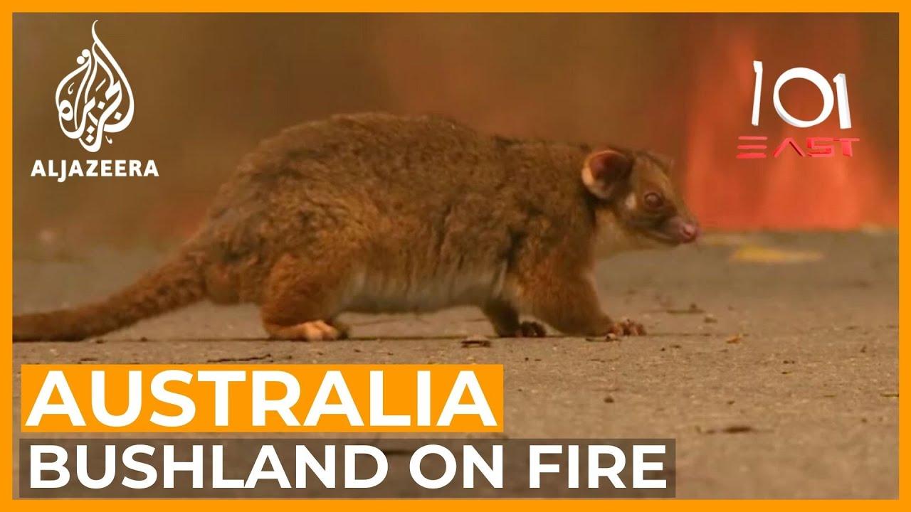 Australia's Wildlife Emergency   101 East