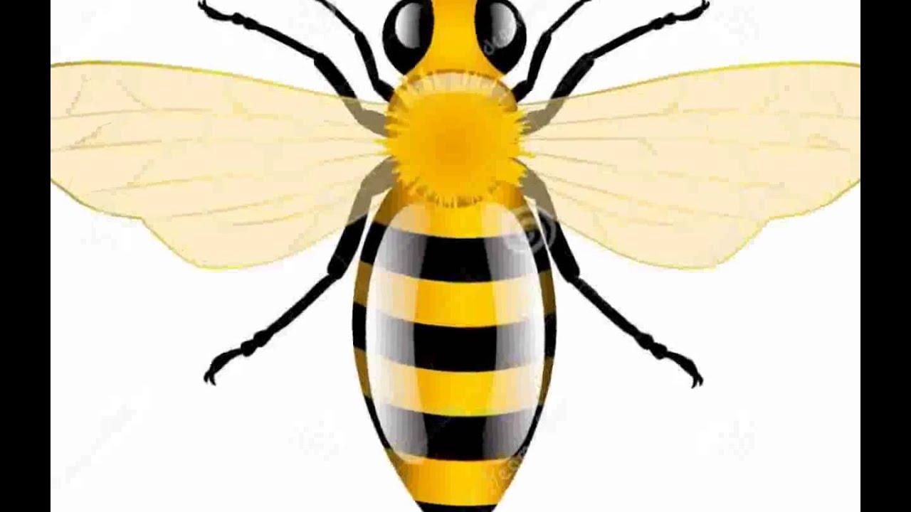Honey Bee - Pictures - YouTube - photo#38