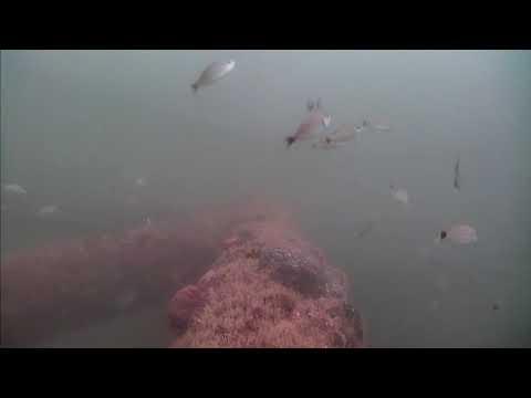 Sharks in the Atlantic Cam 05-28-2017 11:00:10 - 11:28:09