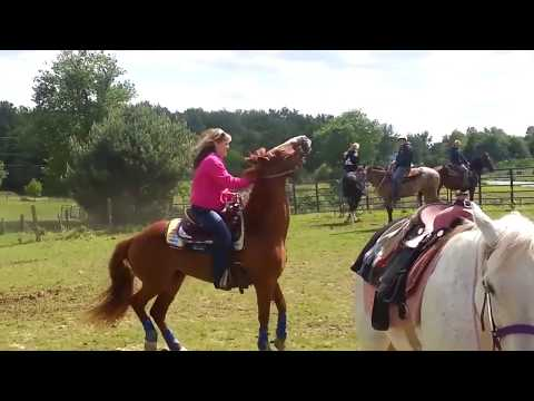 Hot Girl Upskirt Horse Prank from YouTube · Duration:  1 minutes 48 seconds