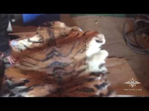Застрелившие тигра в...