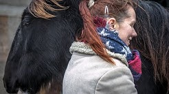 Das Shire Horse Jungpferde-Projekt: Vom Jährling bis zum Reitpferd (2): Eine gute Basis schaffen