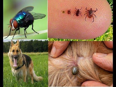 Sabes Cual de estos Animales, posee una enfermedad contagiosa para tu familia