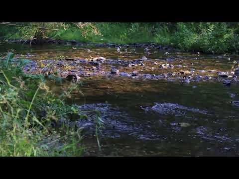 """Montana Creek"", calming meditation, baby sleep music"