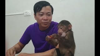 Baby Monkey | Monkey Doo Eats Plum With His Daddy