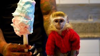 Baby Monkey reacts to COTTON CANDY!