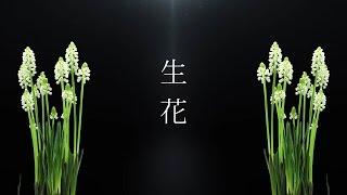 生花/花たん