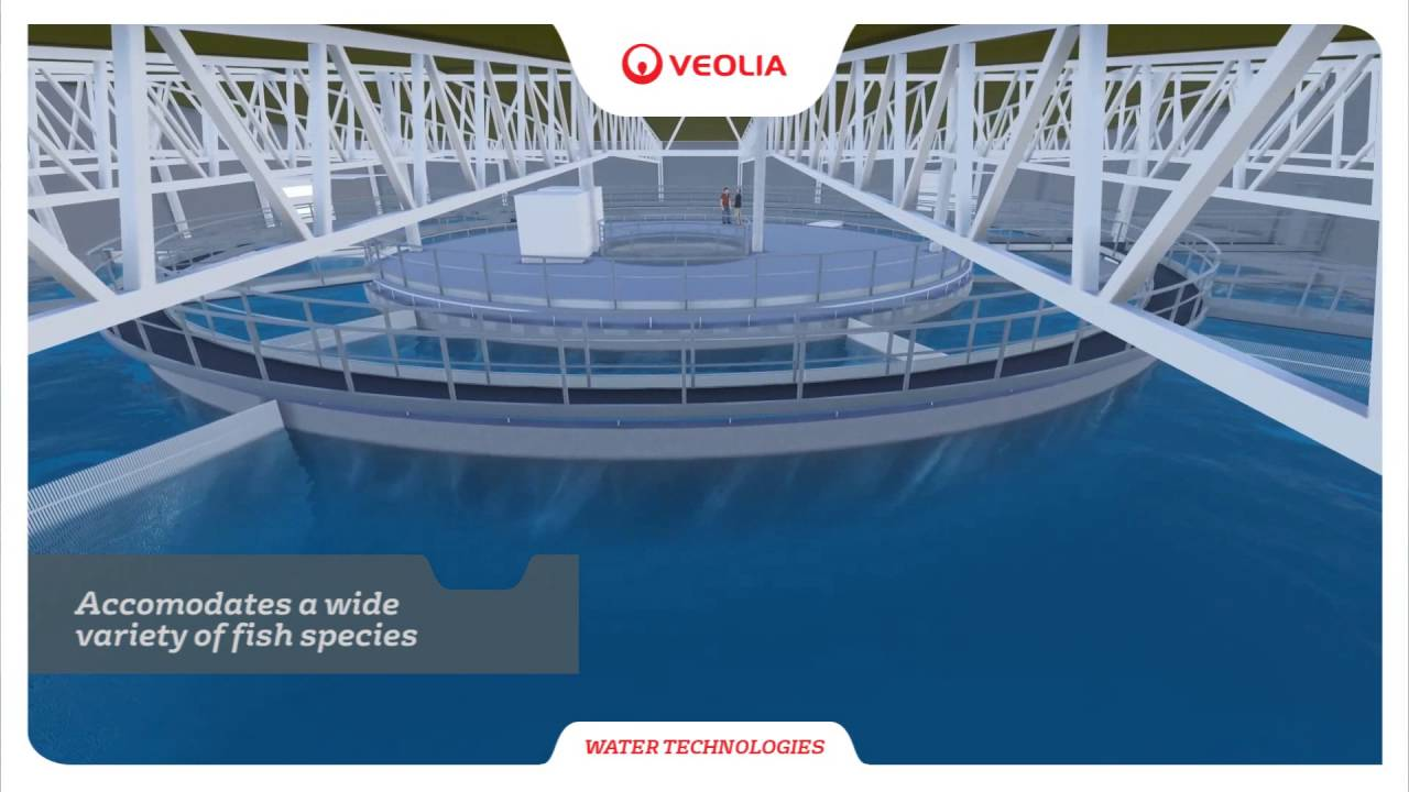 Recirculating Aquaculture Systems - RAS | Veolia