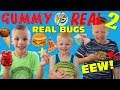 gummy food vs real food eating real dried bugs