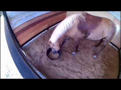 Melihat Kuda Besar, Kuda Putih, Kuda Poni, Kuda...