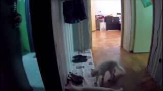 Что делают кошки когда хозяина нет дома?