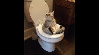 Теперь в автомобиле кошачий туалет!???