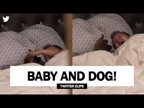 Funny Baby and Dog Playing on Bed | Viral on Twitter!