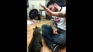 Training Mike the cat to high five