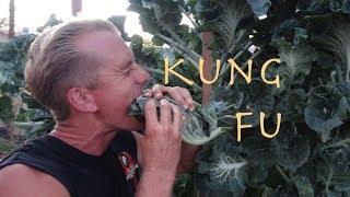Epic Kung Fu Burrito!!!
