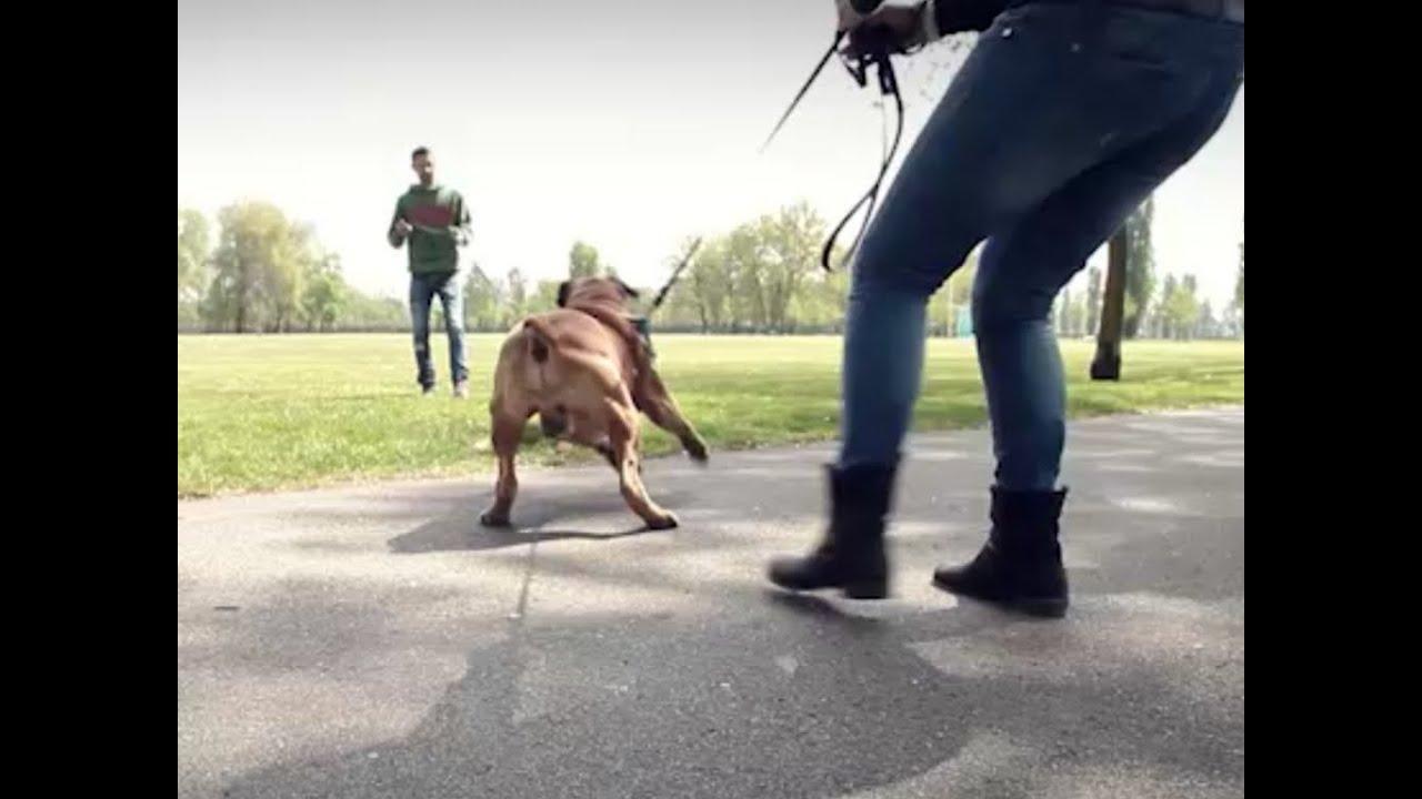 Come Rieducare Un Cane Aggressivo Il Caso Di Duke Youtube