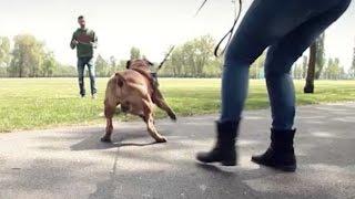 Come rieducare un cane aggressivo Il caso di Duke