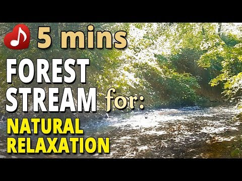 🎧 Forest Stream Video and Sound – 5 minutes – for complete natural relaxation