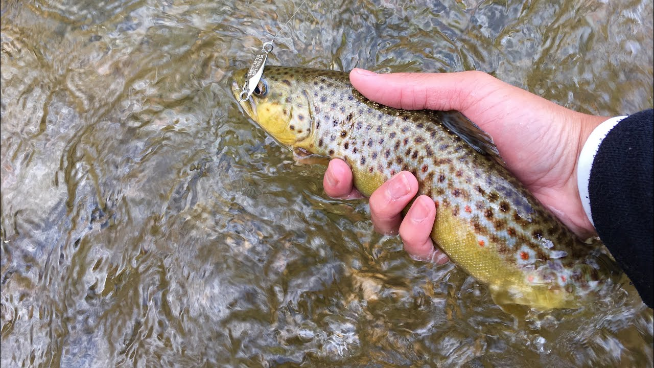 spring trout fishing with spinners, spoons, and plastics - youtube, Fly Fishing Bait