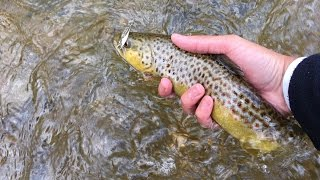 Spring Trout Fishing  with Spinners, Spoons, and Plastics