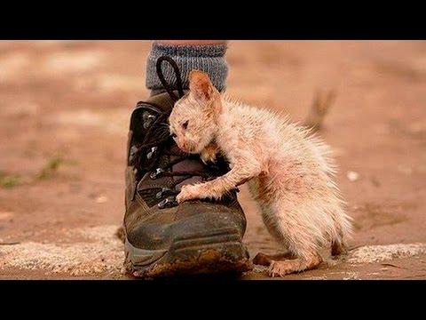 Тайная жизнь домашних животных - Русский тизер-трейлер