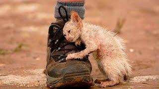 5 ПРАВДИВЫХ историй, возвращающих веру в человечность! Невероятные истории, спасение животных, людей