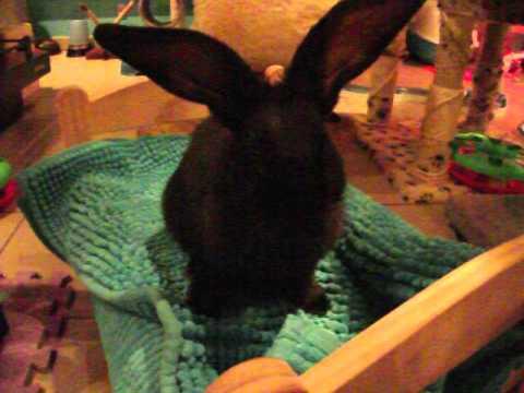 Bunny Lee maakt haar toilet op Ikea bedje