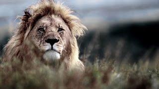 Our Story - Shamwari Game Reserve