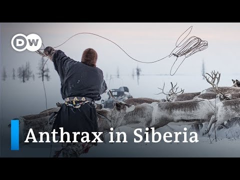 Climate change in Siberia: Melting permafrost wakes slumbering threat | DW News