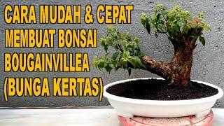 Cara Mudah & Cepat Membuat Bonsai Bougainvillea