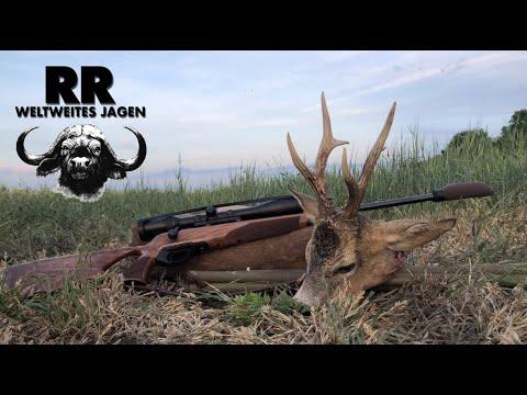 Hunting Adventure Hungary Part 1 Roebuck I Rehbockjagd In Ungarn I RR Weltweites Jagen