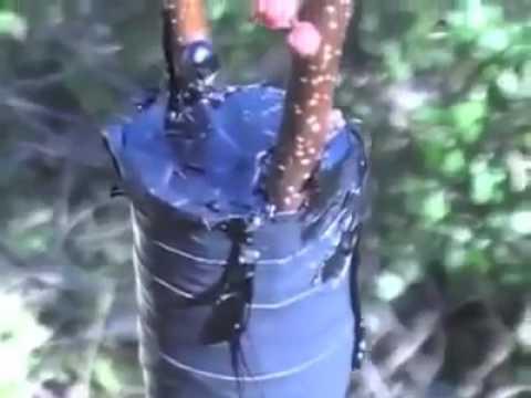altoirea pomilor fructiferi