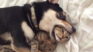 Kucing dan Anjing KOCAK   VIDEO KOMPILASI
