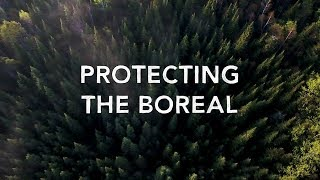 Protect the Boreal Forest
