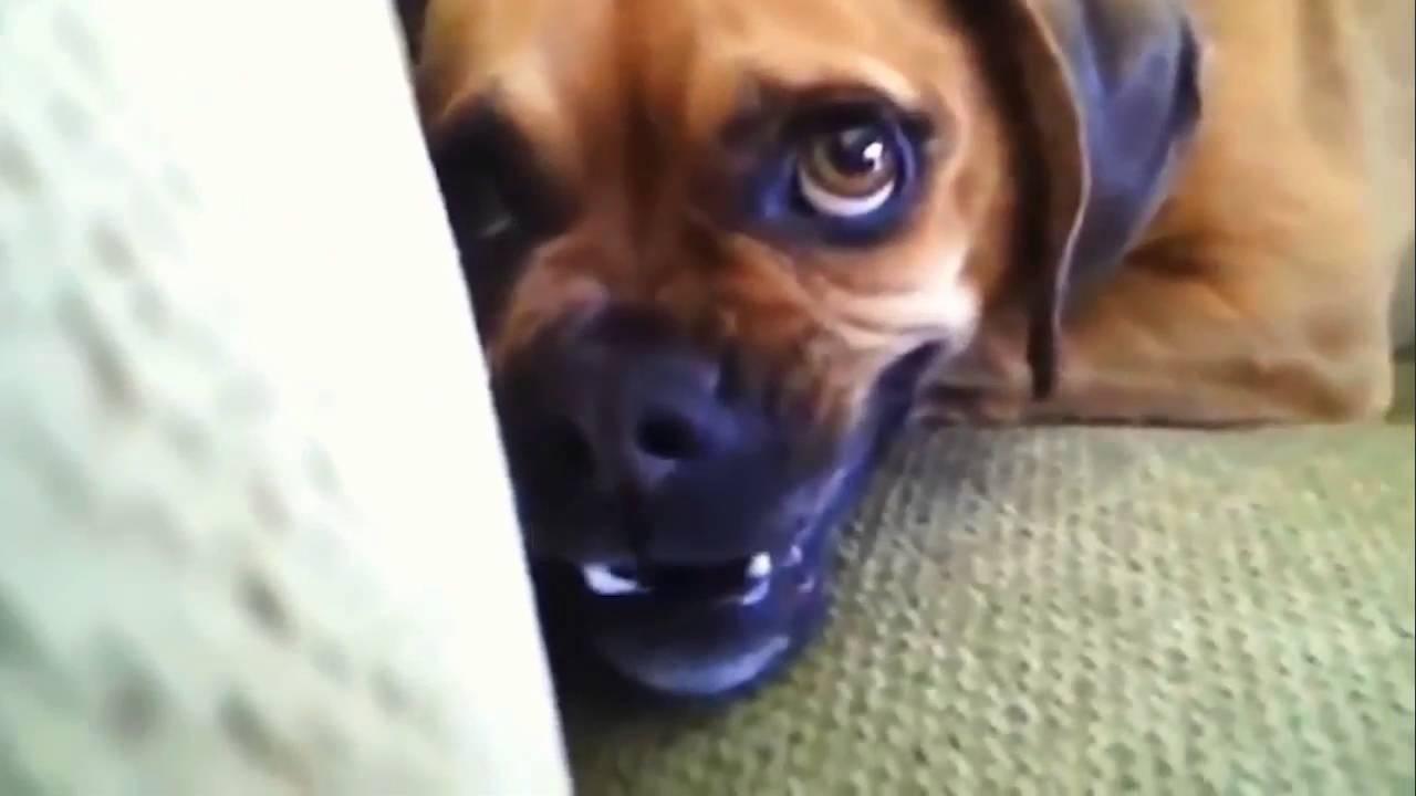 Cani e gatti vs bagnetto compilation divertente youtube for Youtube cani e gatti
