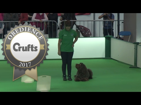 Inter-Regional Rally - Level 3 - Part 1 | Crufts 2017
